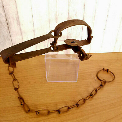 One Oneida victor #1 single long spring traps tested