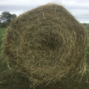 Alfalfa Timothy Grass Horse hay for sale