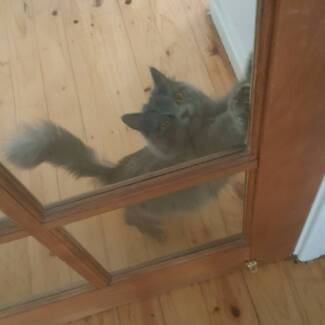 Wanted: Private kitten cat sitting