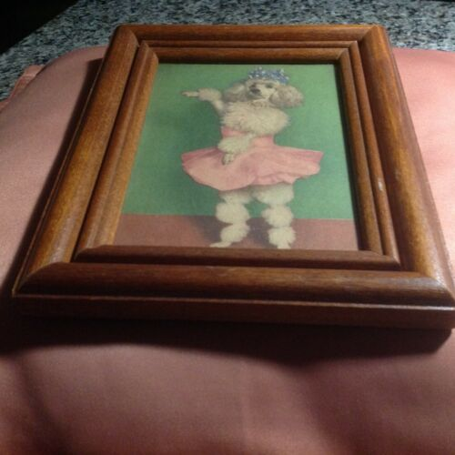 Vintage framed photo of poodle ballerina...!!!! Adorable and sweet!!!!