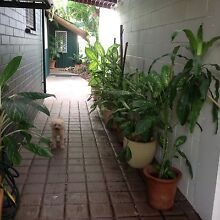Granny Flat By The Sea. Short Term Only. Nightcliff Darwin City Preview