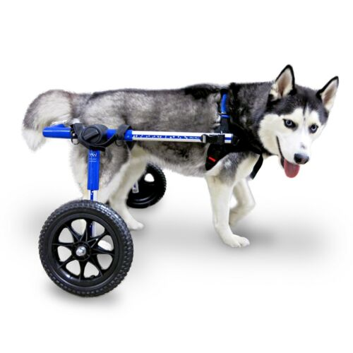 Dog Wheelchair - For Med/Lg Dogs 50-69lbs - By Walkin