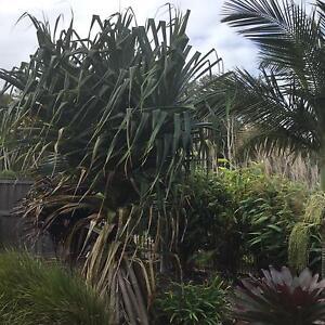Established plants Pelican Waters Caloundra Area Preview