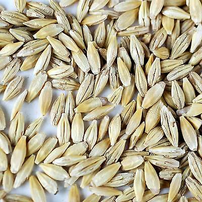 Organic Whole Barley Sprouting Grain   Sprouts  Barleygrass  Food Storage  Etc