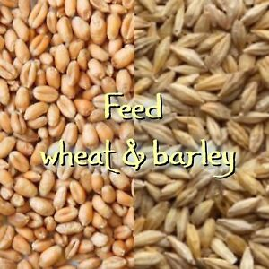 WANTED: feed barely and wheat