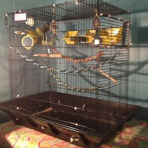 2 Healthy Budgies & Cage & Food ETC... FOR SALE