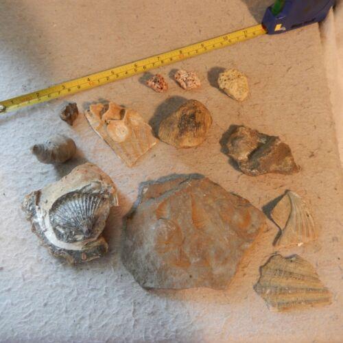 Lot Fossilized Sea Shells Coral Ammonite Seashell Marine Fossil Stone Petrified