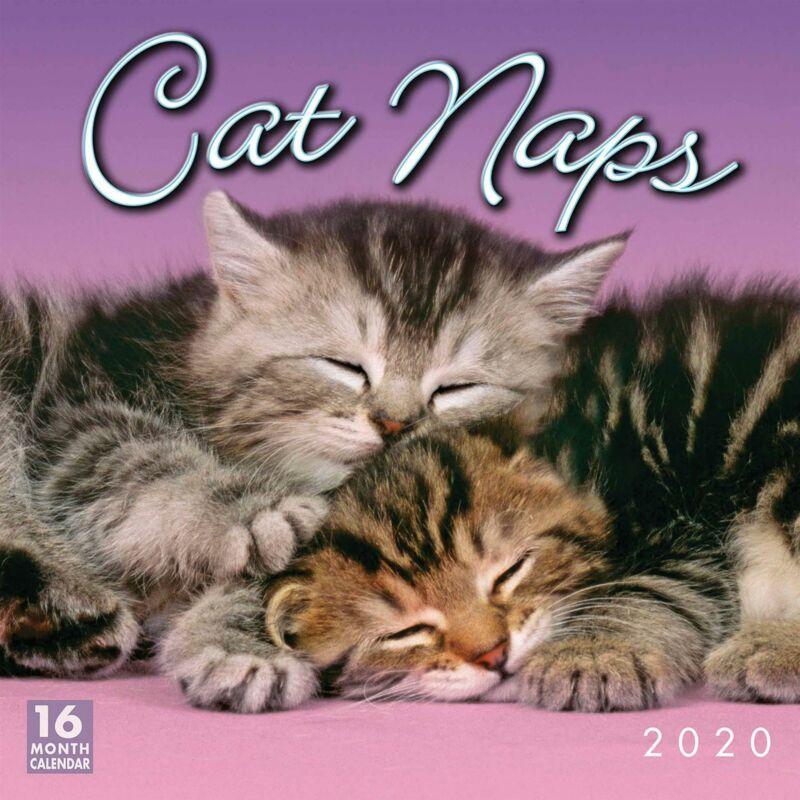 Cat+Naps+2020+Official+Square+Wall+Calendar