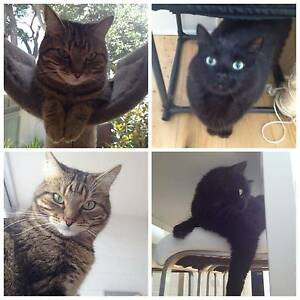 2 Lovely Cats Free to a Good Home Balmain Leichhardt Area Preview