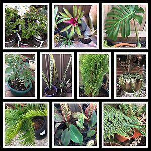 PLANTS FOR SALE Carrum Downs Frankston Area Preview