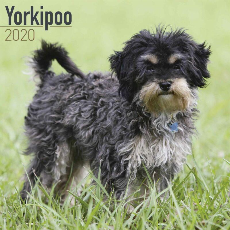 Yorkipoo+2020+Official+Square+Wall+Calendar