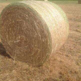 Rye & Clover Pasture Hay