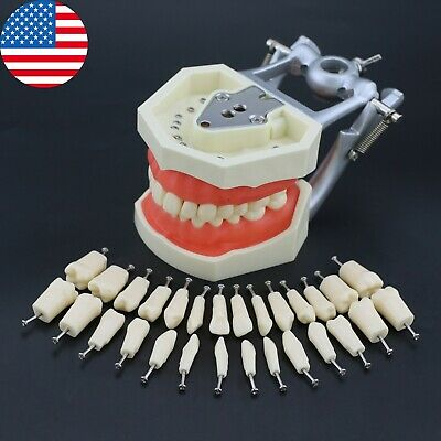 Usa Kilgore Nissin 200 Type Dental Typodont Model Removable 28pcs Screw-in Teeth