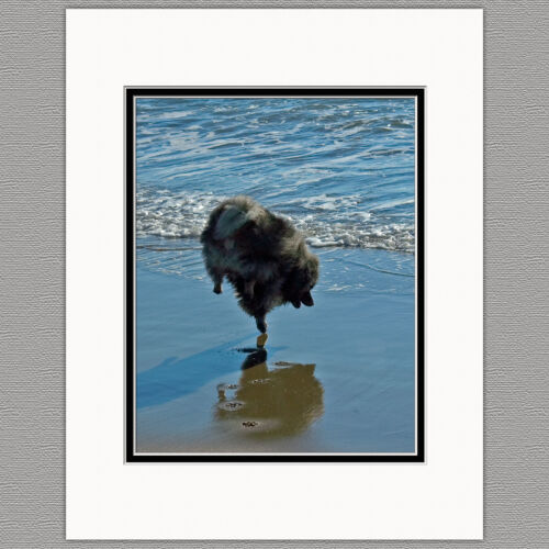 Keeshond Ballet Original Art Photograph Matted 11x14
