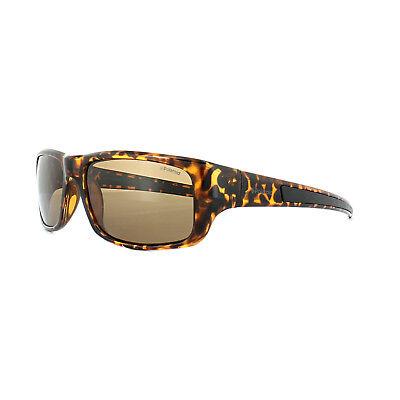 Polaroid Sunglasses 3013/S V08 IG Havana Brown Polarized