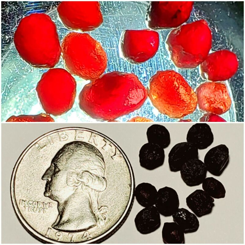 """Gorgeous Natural """"Ant Hill"""" Pyrope Garnet Facet Cab Rough Crystals Lot"""