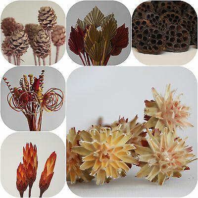 Trockenblumen mix Cane lotos Palmspear Salignum Protea Plumosum Trockengesteck