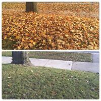Fall Clean Up/Lawn and Garden Maintenance/Shrub and Tree Removal