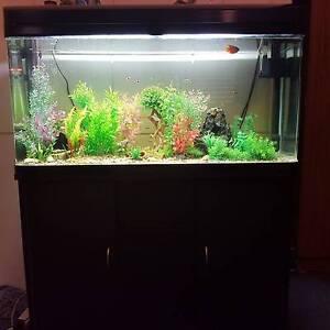 Fish tank in launceston region tas pet products for Large peaceful community fish