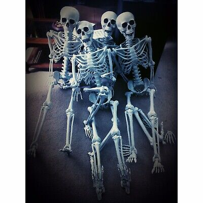 Life Size Poseable Skeletons.
