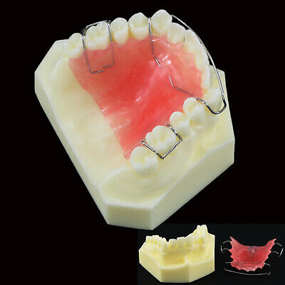 Dental Orthodontic Teeth Model Hawley Retainer Demonstration Study Teach 3007