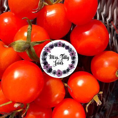 Tomate Topftomate Minibel Tomatensamen 10 Samen Cherrytomate für Balkon Fenster