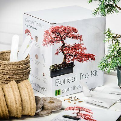 Plant Theatre - Bonsai Trio Kit per la coltivazione di 3 bonsai