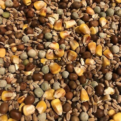 Wild Garden Bird Pigeon Food Mixed Seeds 3 kg Nutritional High Protein Fats Oil