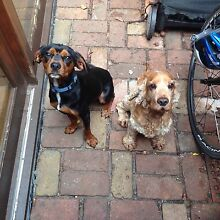 Looking For Temporary Carers for Our Two Dogs for up to Two Years Middle Park Port Phillip Preview