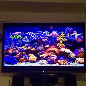 "Smart 70"" Sharp Aquos Quattron"