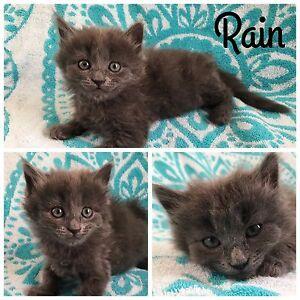 RAIN - Little Legs Dog & Cat Rescue Graceville Brisbane South West Preview