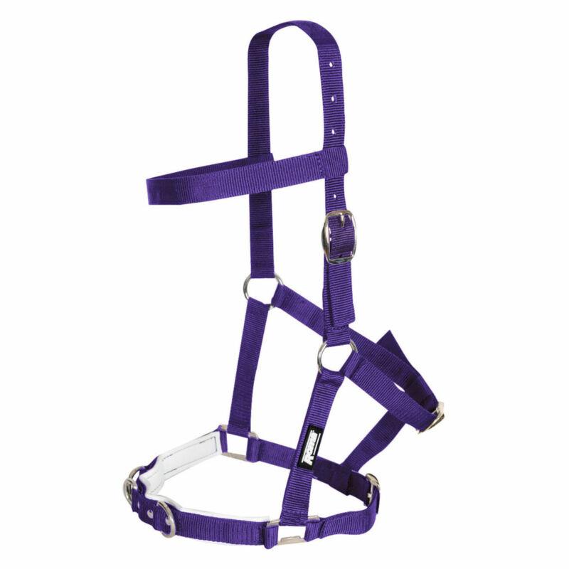Kincade Nylon Padded Saddlery Lunge Cavesson - Purple All Sizes