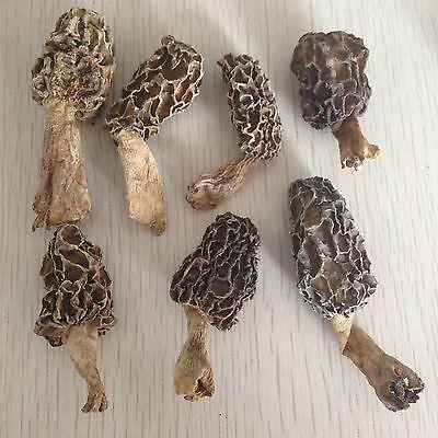 ( Morels Mushrooms Dried  3.5oz New Fresh Gourmet Wild)