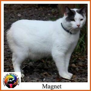 Magnet - Soquilichi Rescue Ranch