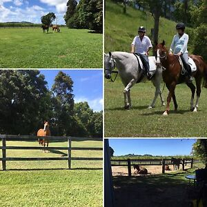 HORSE AGISTMENT - Cudgera Creek Tweed Heads Area Preview