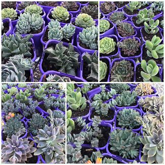Succulent Cacti and Agave $5