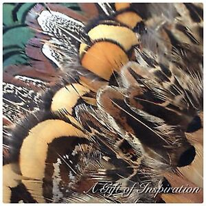 Mix of 25 Amazing Pheasant feathers 5 of each colour craft/millinery/jewelery