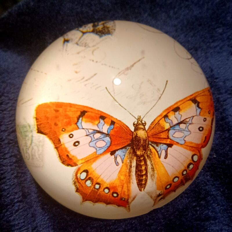 Glass Dome Butterfly Paperweight Vintage