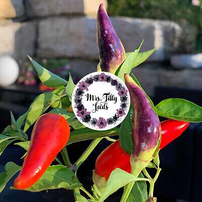 10 Samen CHILI Chilisamen Bunte Sorte Schärfe 5 Gemüsesamen 100% Organisch BIO