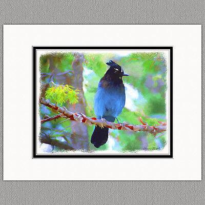 Steller's Jay Blue Jay Wild Bird Original Art Print 8x10 Matted to 11x14