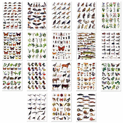 Set of 18 A5 Wildlife Nature Identification Cards Charts Postcards Animals Birds