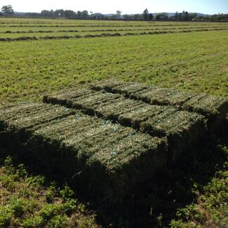 Good quality Lucerne . Free delivery Boonah Ipswich South Preview