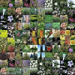 20 Native Plants 4 Types Random Mix Hardy Shrubs Trees Grass Garden Flowers Etc