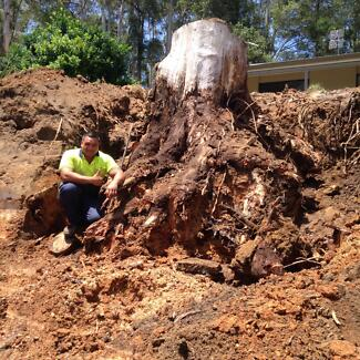Central Coast Tree & Stump Removal
