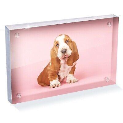 Basset Hound Photo Frame - Beautiful Basset Hound Puppy Photo Block 6 x 4