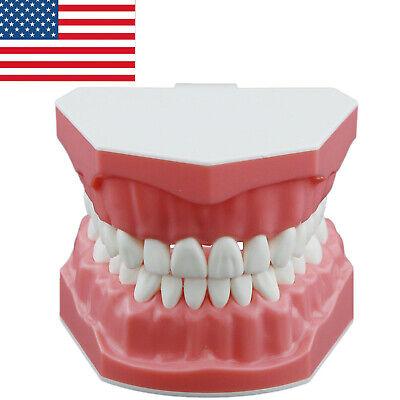 Usa Dental Brushing Teeth Model Flossing Typodont Model 11 Standard