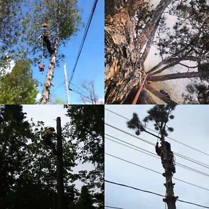 Property maintenance and tree removal