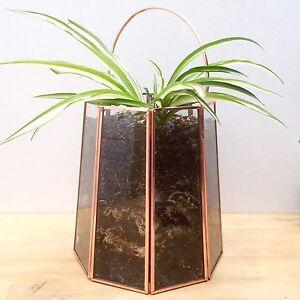 NEW Glass & Copper Amalfi Lantern Terrarium With Healthy Spider Plants North Melbourne Melbourne City Preview