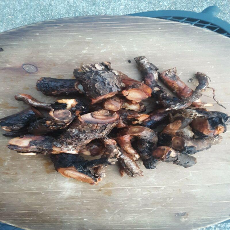 1lb Sassafras root FRESH hand dug organic all natural FREE SHIPPING