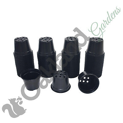 10 x 13cm Plant Pots Black Plastic 1 Litre L lt Professional Thermoformed for sale  Shipping to Ireland